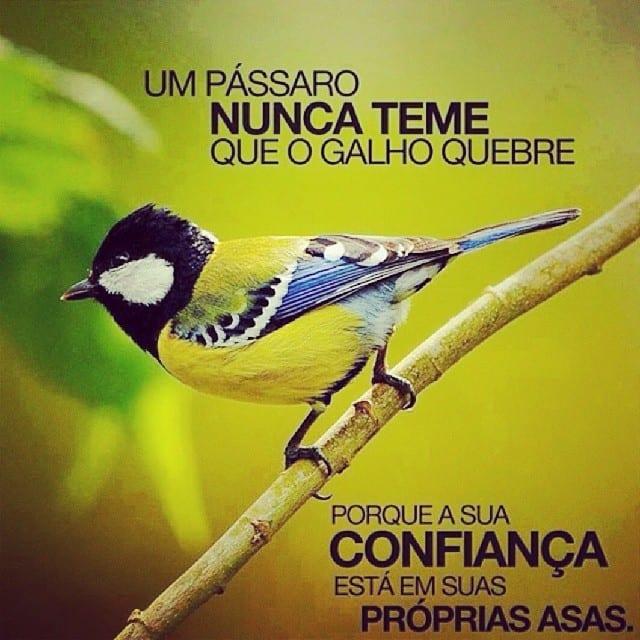 Um pássaro nunca teme