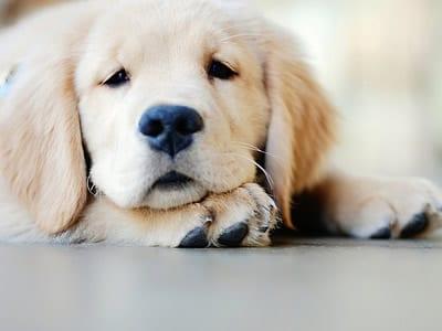 Frases Sobre Cachorro Belas Mensagens