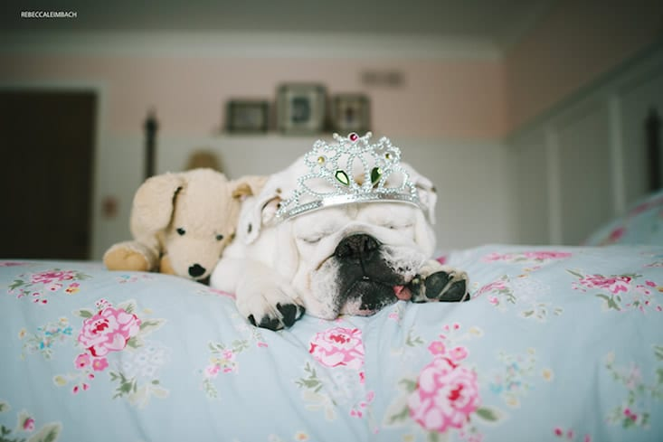 garotinha-e-bulldog-ingles-13