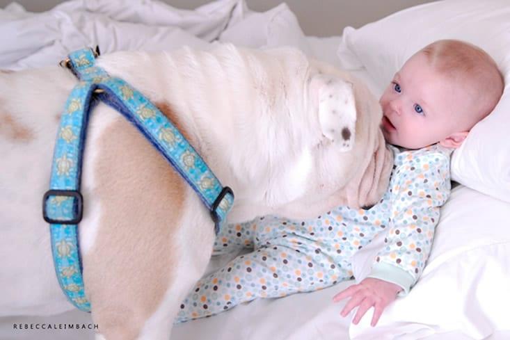 garotinha-e-bulldog-ingles-2