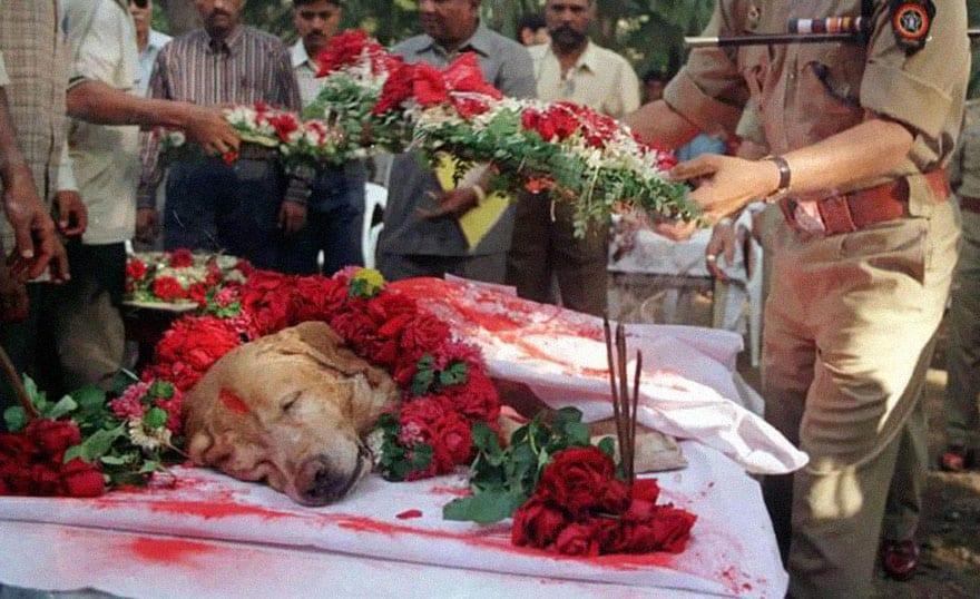 cachorro-mumbai