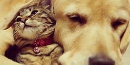 Golden Retriever adota um gatinho que foi rejeitado por sua mãe