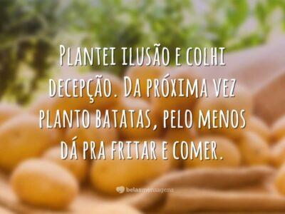 Plantarei batatas