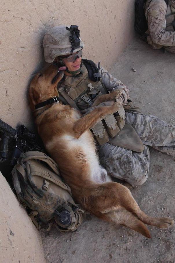 soldados-animais-11