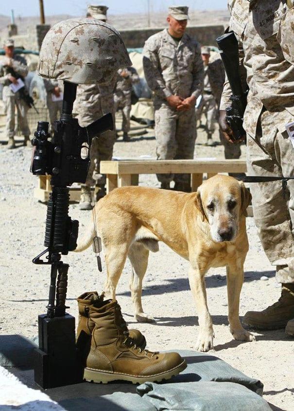 soldados-animais-14