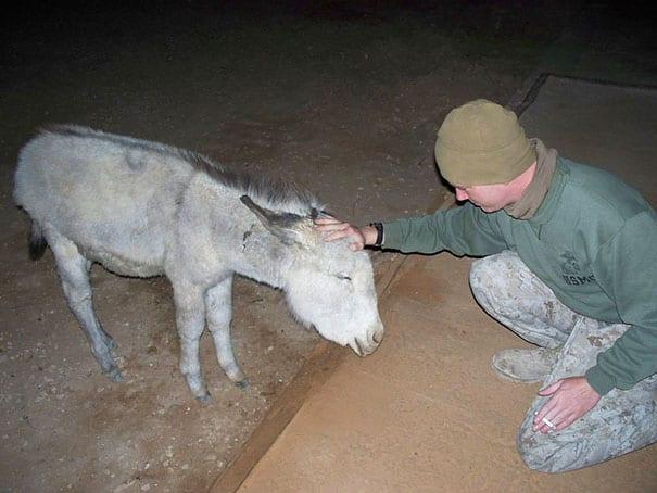 soldados-animais-16