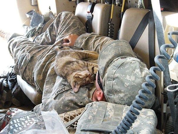 soldados-animais-2