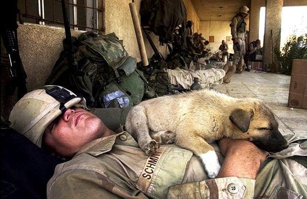 soldados-animais-21