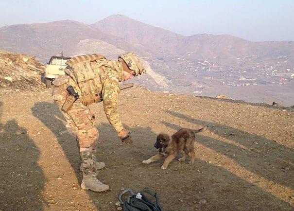 soldados-animais-22