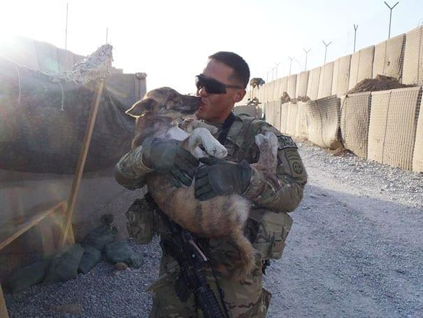 soldados-animais-8
