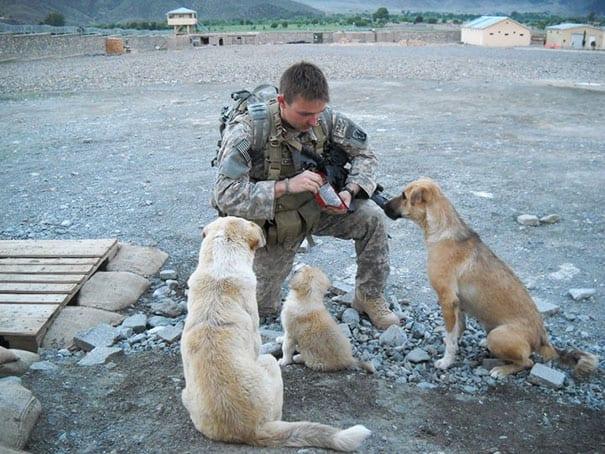 soldados-animais-9