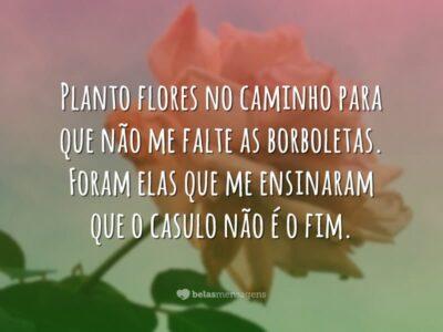Planto flores no caminho