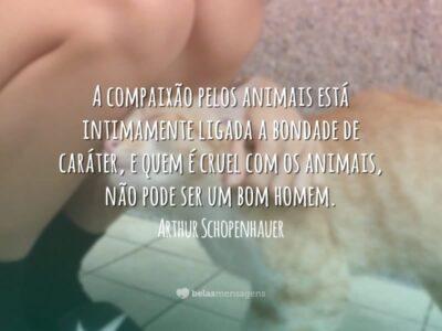 Compaixão pelos animais
