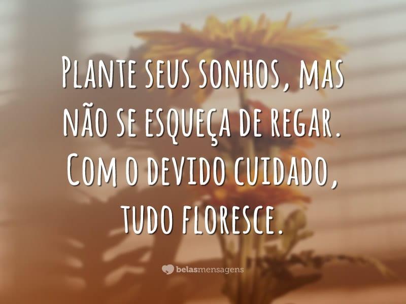 Plante seus sonhos