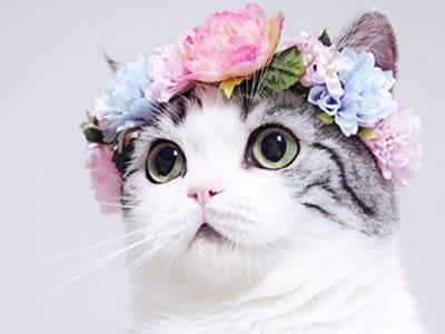 50 frases de flores que trazem muita leveza ao seu dia