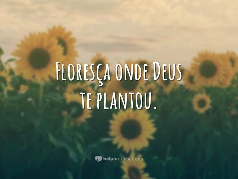 Mensagem Floresça Onde Deus Te Plantar últimas Plantas