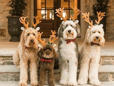 30 mensagens de Natal para amigos que vão celebrar essa data com muito carinho