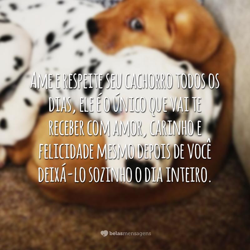 Ame e respeite seu cachorro todos os dias, ele é o único que vai te receber com amor, carinho e felicidade mesmo depois de você deixá-lo sozinho o dia inteiro.
