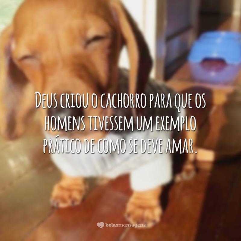 Deus criou o cachorro para que os homens tivessem um exemplo prático de como se deve amar.