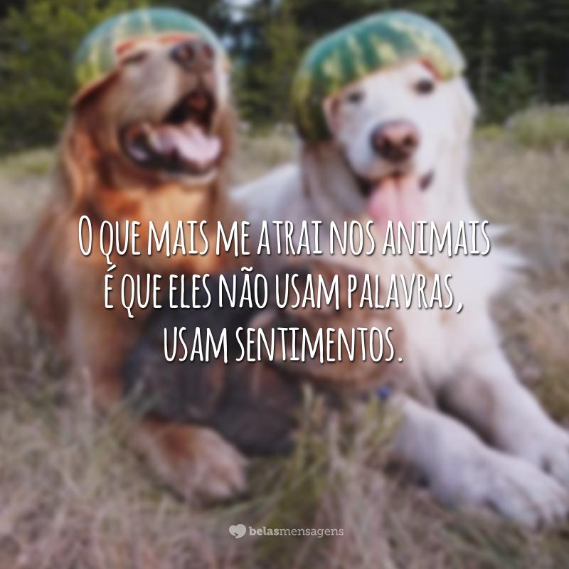 O que mais me atrai nos animais é que eles não usam palavras, usam sentimentos.