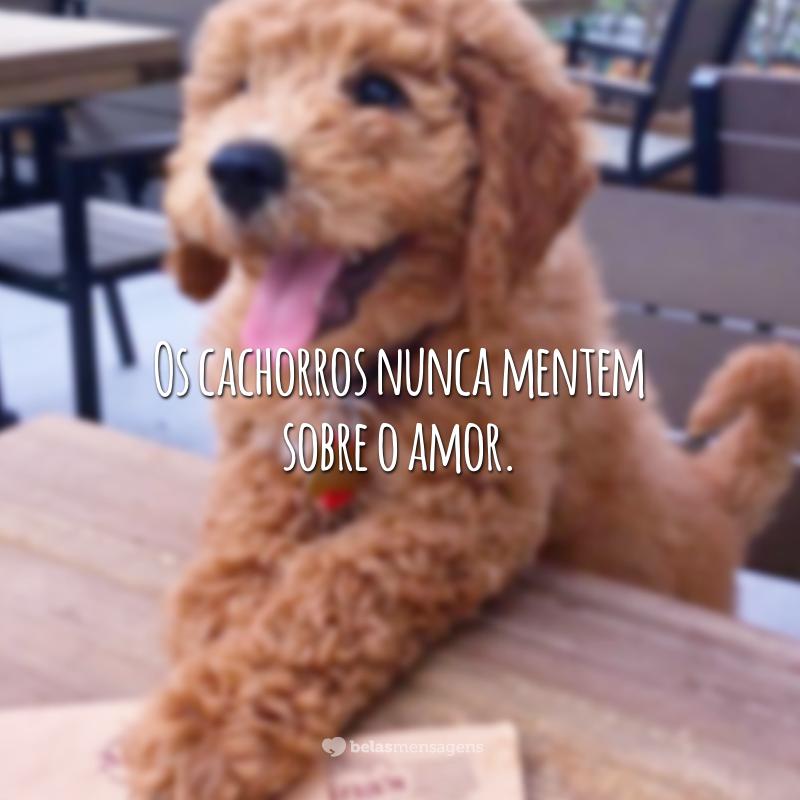 Os cachorros nunca mentem sobre o amor.