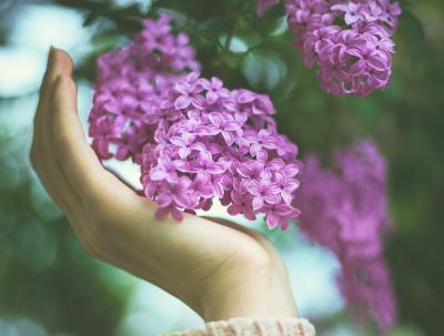 40 frases de bem-vinda primavera para celebrar a estação das flores