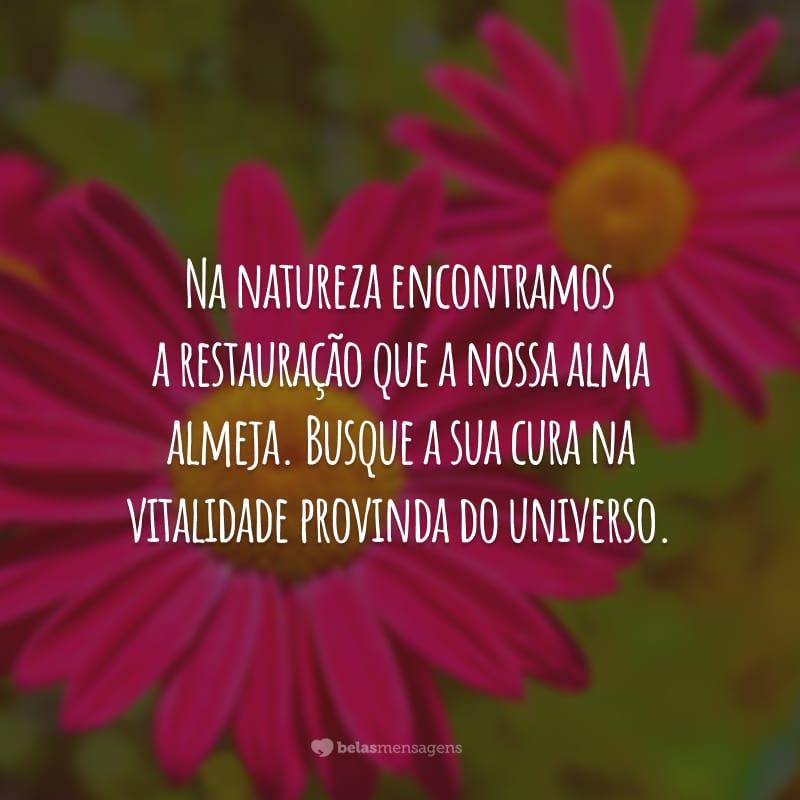 Na natureza encontramos a restauração que a nossa alma almeja. Busque a sua cura na vitalidade provinda do universo.