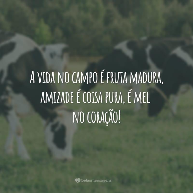 A vida no campo é fruta madura, amizade é coisa pura, é mel no coração!