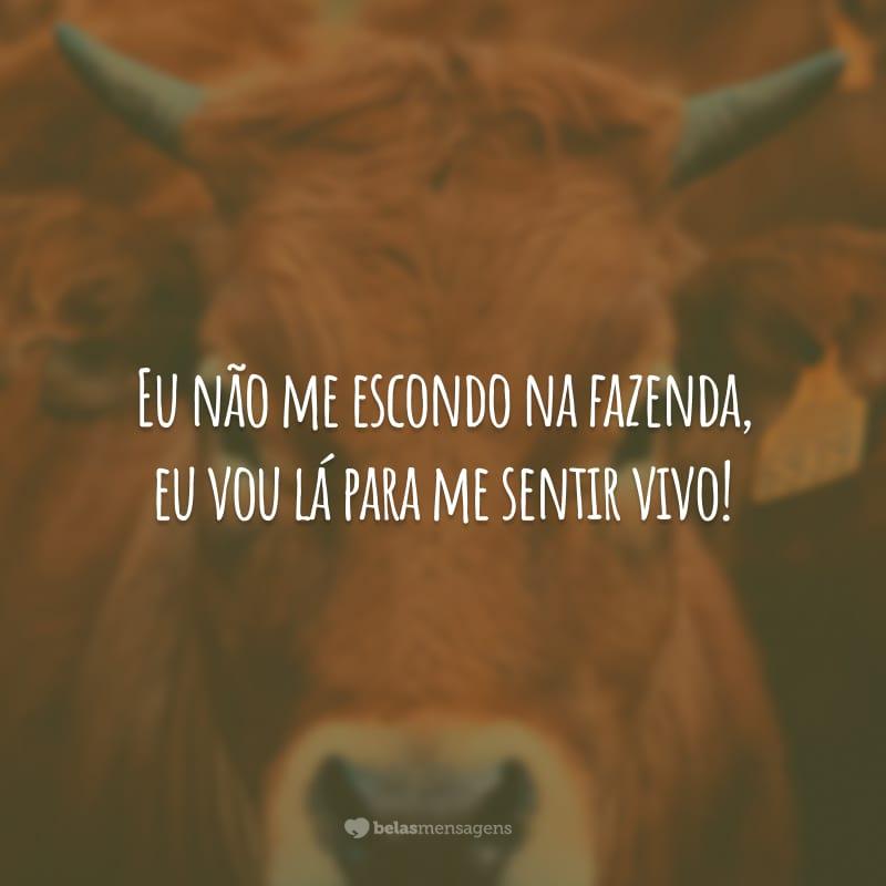 Eu não me escondo na fazenda, eu vou lá para me sentir vivo!