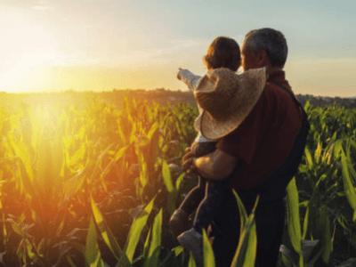50 frases de fazenda para declarar seu amor pelo campo e natureza