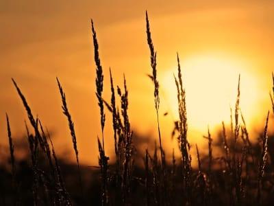 40 frases de bom dia com sol para uma manhã iluminada