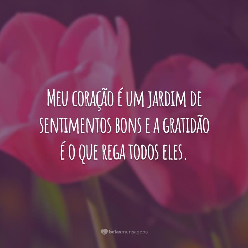 Meu coração é um jardim de sentimentos bons e a gratidão é o que rega todos eles.