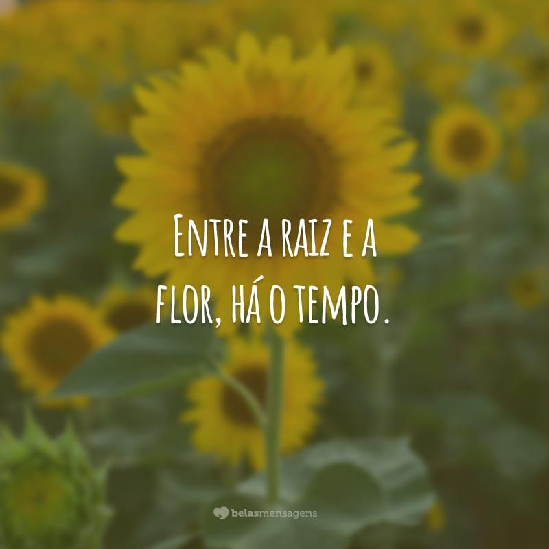 Entre a raiz e a flor, há o tempo.